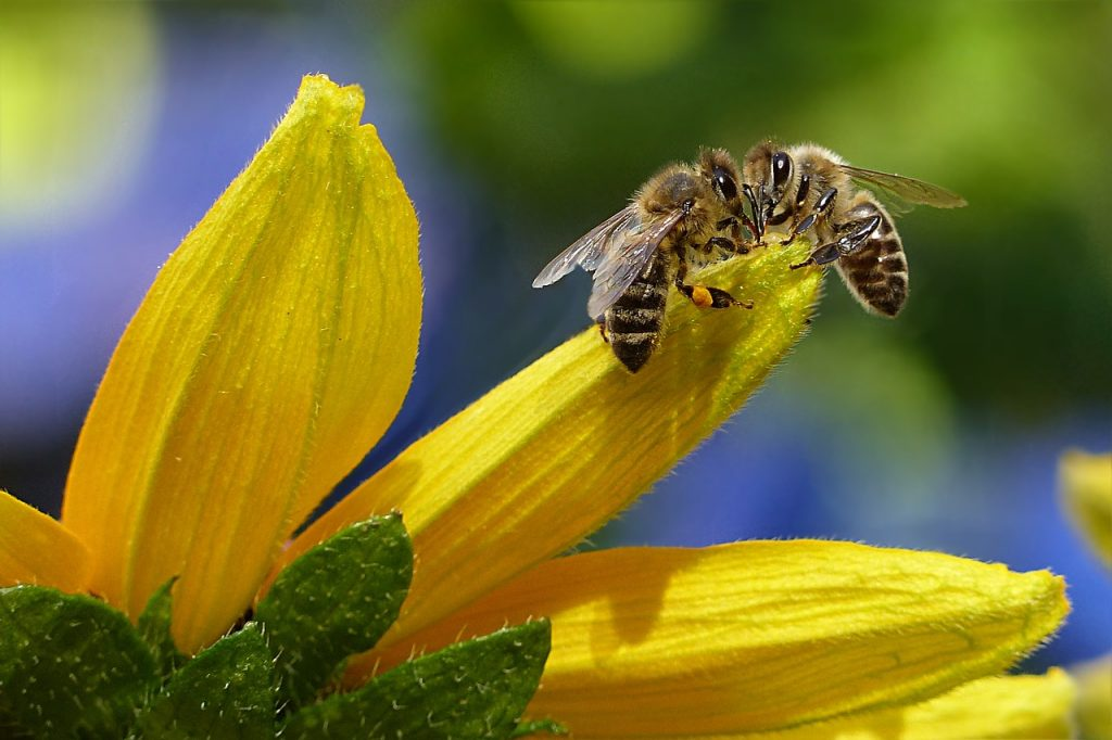 manuka honing de tuinen
