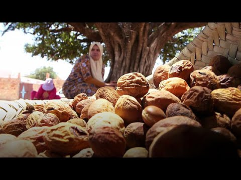 The gold that grows on Morocco's argan trees – target