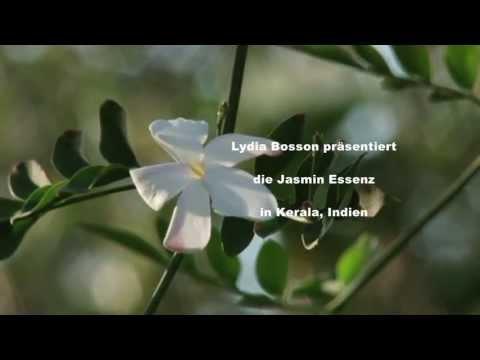 Aromatherapie – Jasmin Ätherische Öle – Lydia Bosson