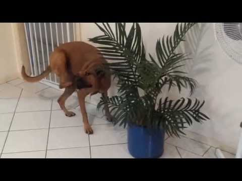 Tonka and her weird plant obsession..