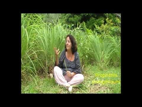 Aromathérapie – La Citronnelle – Lydia Bosson