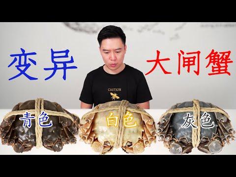 试吃万里挑一的白色大闸蟹,有钱都买不到,隔着壳都能看到蟹膏【小文哥吃吃吃】