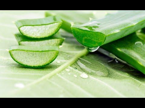 Aloe Vera 10 Beneficii si Intrebuintari pentru Sanatate