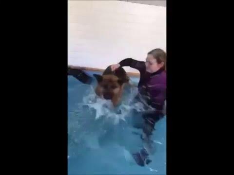 Ziva hydrotherapie bij HydroDogs