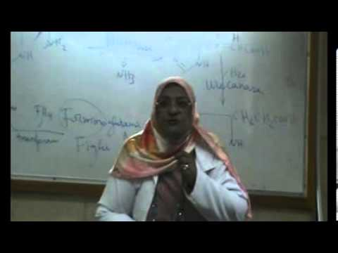 "AA Metabolism 4 "" (histidine,arginine,proline,lysine """