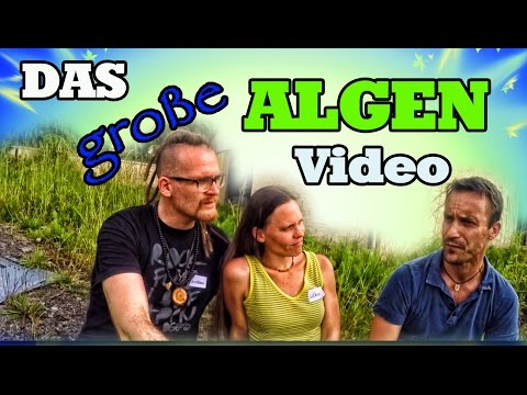 Chlorella Algen Doku, Interview Algen züchten, Rundgang Algenfarm, Chlorella zu Entgiftung, Afa Alge