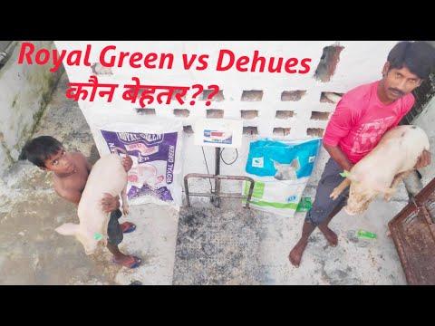 Royal Green vs Dehues feed?