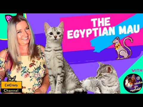 What is the Egyptian Mau cat breed all about? – 😻 CatCrazy