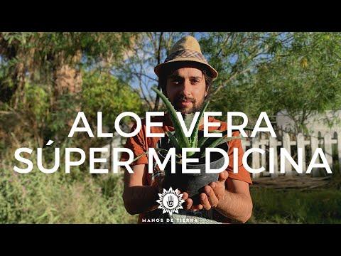 Cómo Utilizar La Planta De ALOE VERA Para Uso MEDICINAL/ Propiedades De La SÁBILA.