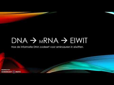 DNA, mRNA, eiwit: transcriptie en translatie