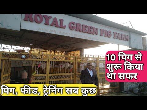 रॉयल ग्रीन पिग फार्म । Royal Green Pig Farm Haryana