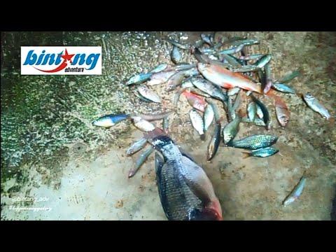 mancing lagi 🎣 | micro fishing | dapet bonusan | Muntilan, Magelang