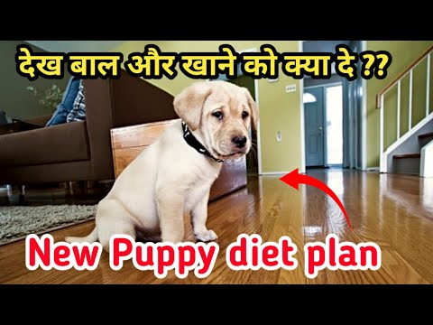 New puppy healthy diet plan /How to care a new puppy / vitamins / calcium / liver tonic / Food 🔥