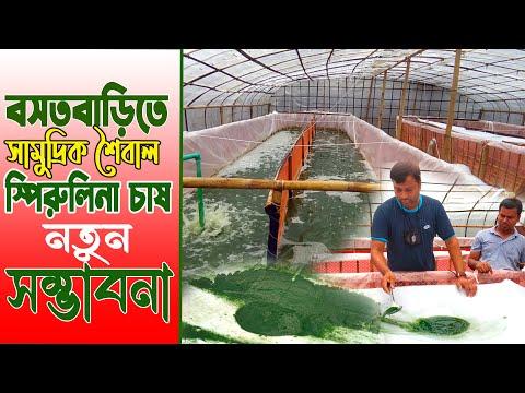 বসতবাড়িতে সামুদ্রিক শৈবাল স্পিরুলিনা চাষে নতুন সম্ভাবনা | স্পিরুলিনা চাষ পদ্ধতি | Spirulina Farming