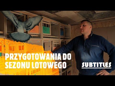 PRZYGOTOWANIA gołębi do SEZONU LOTOWEGO. Hodowca PZHGP Zbigniew Rodak – WYŚCIGI Gołębi Pocztowych.