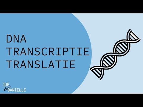 Genetica 1: DNA, transcriptie en translatie
