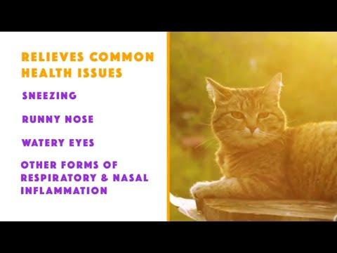 Byron Pets L-Lysine For Cats  30 Seconds