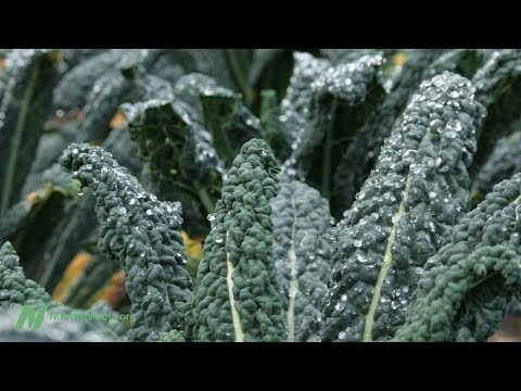 The Benefits of Kale and Cabbage for Cholesterol