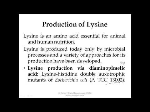 Microbial Production of Aminoacid L Lysine