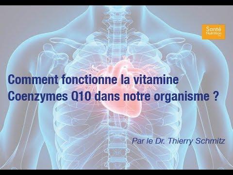 Comment fonctionne la vitamine Coenzymes Q10 dans notre organisme ?