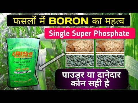 Boron युक्त [S.S.P]   Single Super Phosphate   फसल पर क्या महत्व है.