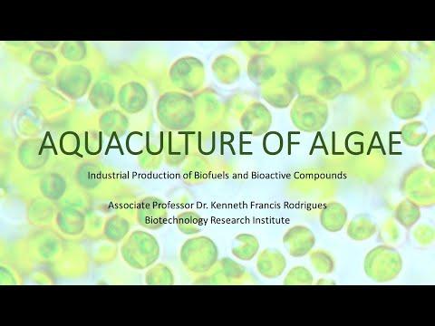 AQUACULTURE OF ALGAE: Production of Astaxanthin