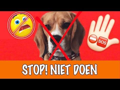 Doe dit nooit met honden! | DierenpraatTV