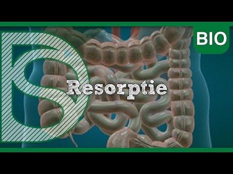 Examen biologie – Resorptie (Voeding en vertering)
